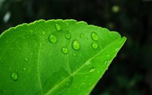 Ingredienti naturali-